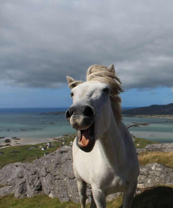 Told a few jokes to a horse on top of Beinn Scrien on Eriskay...