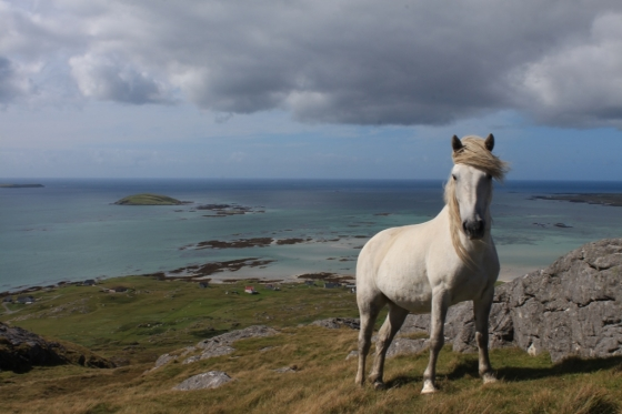 Very friendly and beatiful Eriskay horse at the top of Beinn Scrien in August 2013.