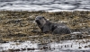Life along the shore...